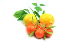 Kumquat e limoni Immagini Stock Libere da Diritti