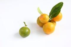Kumquat en el fondo blanco Fotos de archivo libres de regalías
