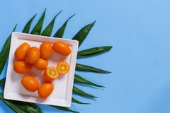 Kumquat fruits on a blue background stock photo