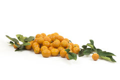 Kumquat Royalty Free Stock Photos