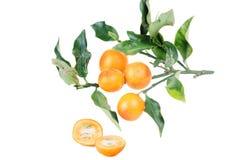 Kumquat isolato sopra su fondo bianco Kumquat, cumquats smal Fotografia Stock