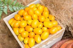Kumquat organische Sinaasappel Royalty-vrije Stock Foto's