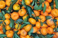 Kumquat pequeno, laranja pequena asiática Fotos de Stock
