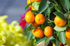 Kumquat por Año Nuevo chino