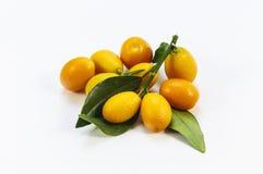 Kumquat takken op een witte achtergrond Stock Afbeeldingen