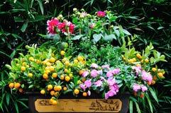 Kumquat Tree and flower Stock Image