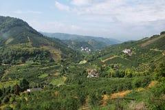 Kumquat trees plantation and valleys near Yangshuo, Royalty Free Stock Photo