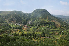 Kumquat trees plantation and valleys near Yangshuo, Stock Images