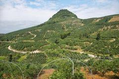 Kumquat trees plantation and valleys near Yangshuo, Royalty Free Stock Photography