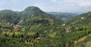 Kumquat trees plantation and valleys near Yangshuo, Stock Photography