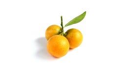 Kumquat on white background Stock Photos