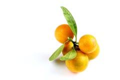 Kumquat on white background Royalty Free Stock Image