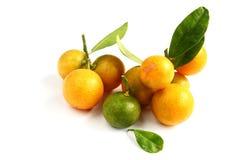 Kumquat on white background Stock Image