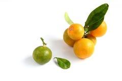 Kumquat on white background Royalty Free Stock Photography