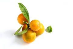 Kumquat on white background Stock Photography