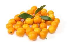 Kumquat in a wite background Stock Photo