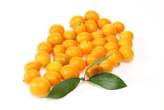 Kumquat in a wite background Royalty Free Stock Photos