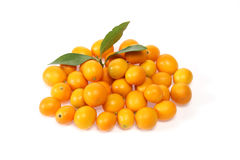 Kumquat in a wite background Royalty Free Stock Image