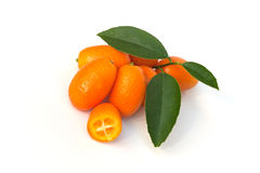 Kumquats Royaltyfri Foto