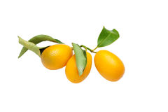 Free Kumquats Close Up Stock Photography - 13330812