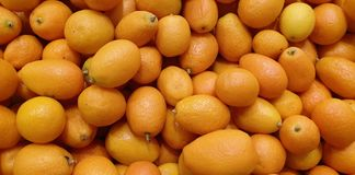 kumquats image stock