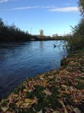 Kuna flod Arkivbild