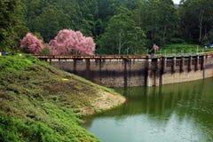 Kundala fördämning, Munnar, Kerala arkivbild