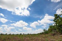 Kunde i blå himmel med fält och bananträd nära elektr. Thailand Arkivfoto