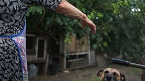Kundel na łańcuchu pies raduje się i skacze na widzieć jego starszej kochanki Biedna wiejska kobieta i jej zwierzę domowe zbiory wideo
