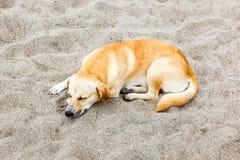 Kundla pies Obrazy Royalty Free