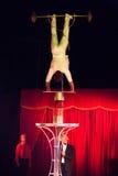 Kundutbildning för jämvikt i cirkus Arkivfoto