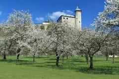 Kuneticka hora in spring Royalty Free Stock Image