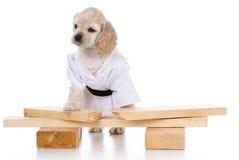 Kung fu dog Royalty Free Stock Photo