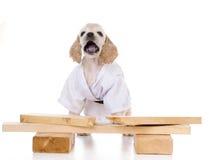 Kung fu dog Royalty Free Stock Image