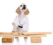 Kung fu dog Stock Image