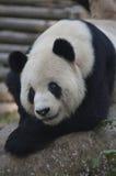 Kung Fu Panda Lizenzfreie Stockfotos