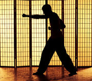 Kung fu punch Royalty Free Stock Images