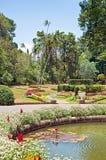 Kunglig botanisk trädgård av Sri Lanka Fotografering för Bildbyråer