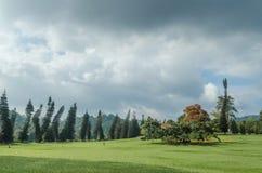 Kunglig botanisk trädgård Peradeniya Arkivfoto