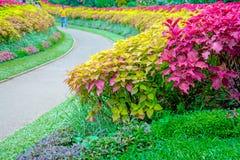Kunglig botanisk trädgård Peradeniya, Sri Lanka arkivbild