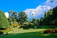 Kunglig botanisk trädgård, Peradeniya Sri Lanka arkivbild