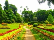 Kunglig botanisk trädgård Peradeniya Sri Lanka royaltyfria bilder