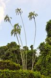 Kunglig nationalpark. Sri Lanka Royaltyfri Bild