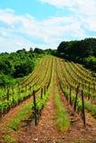 Kunglig vingård royaltyfri foto