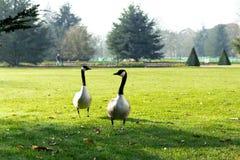 Kungliga botaniska trädgårdar, Kew Arkivbilder