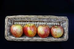 Kungliga Gala Apples i korg fotografering för bildbyråer