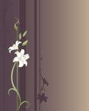 kungliga liljar vektor illustrationer