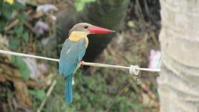 kungsfiskarefågel som placerar på hållande ögonen på fisk för elektrisk tråd för att slösa Fotografering för Bildbyråer