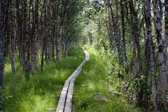 Kungsleden footpath with Wooden Planks. The footpath with wooden planks on the Kungsleden trail in northern Sweden Stock Photo