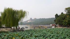 Kunming jezioro, Chiny Wierzba, lotos i pagoda, obrazy stock